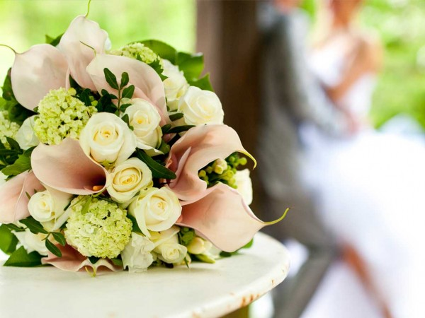 Organise your wedding with Tranquil Park Wedding Venue Maleny Montville